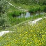 Желтый склон