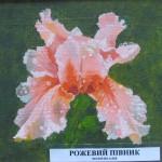 Розовый петушок